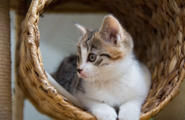 In Islanda arriva Kattarshians, il Grande Fratello dei gatti