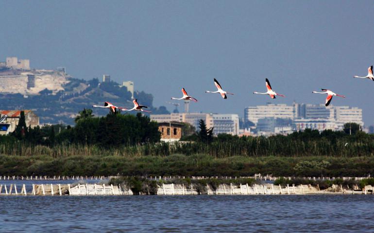 """I fenicotteri, """"Sa Genti Arrubia"""", gli eleganti uccelli rosa simbolo della città di Cagliari e della Sardegna"""