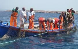 La squadra a lavoro per seguire la migrazione del tonno rosso
