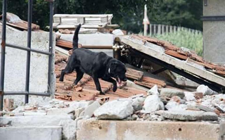 Ad Amatrice tra le macerie: la storia di Asia, il cane che cerca le persone scomparse