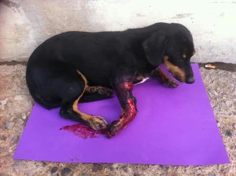 Capoterra. Cucciolo in fin di vita, investitore scappa senza prestare soccorso