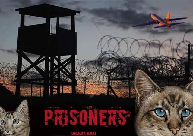 Elmas, trenta gatti prigionieri di una recinzione. Il responsabile della colonia felina dell'ex aeroporto militare lancia l'appello