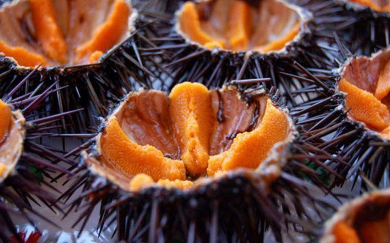 Cagliari, slitta la stagione dei ricci: niente degustazioni dal 1° novembre