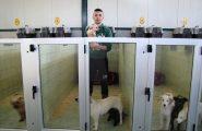 Lavorare in canile: al via il primo corso per volontari della Sardegna
