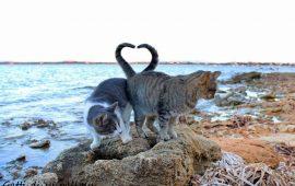 I gatti di Su Pallosu promossi dalla Regione Sardegna: l'Oasi felina è stata inserita negli itinerari turistici isolani
