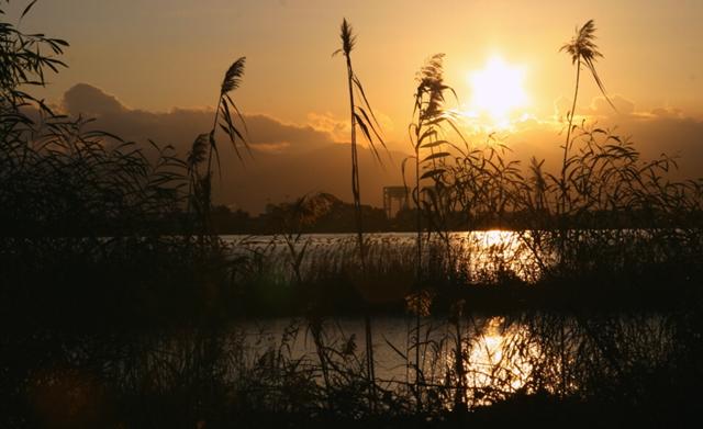 La foto. Il tramonto tra le canne della laguna di Santa Gilla nella magnifica immagine di una lettrice