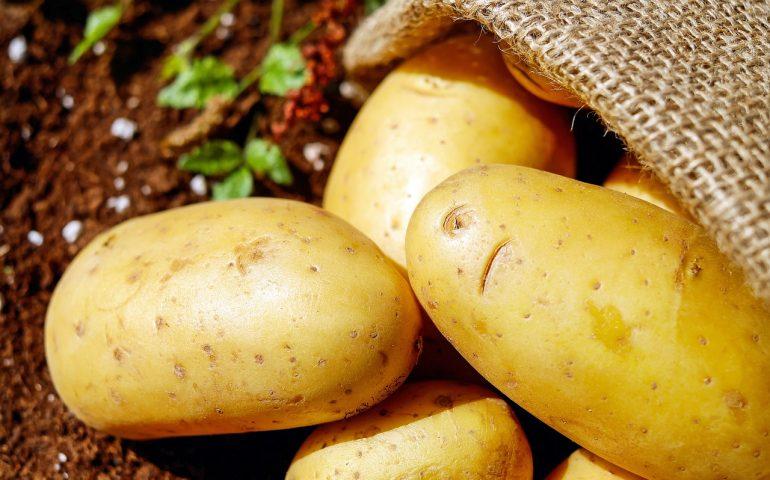 """Tutto pronto a Monastir per la seconda edizione della """"Sagra della patata"""""""