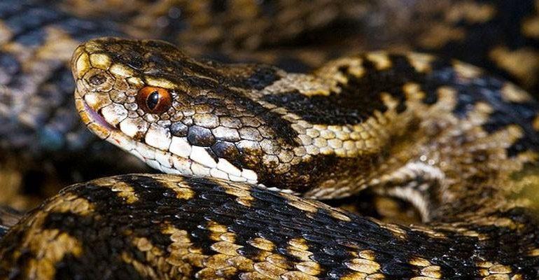 Lo sapevate? In Sardegna milioni di anni fa pare vivessero vipere e serpenti velenosi. Perché adesso nell'Isola non ci sono più?