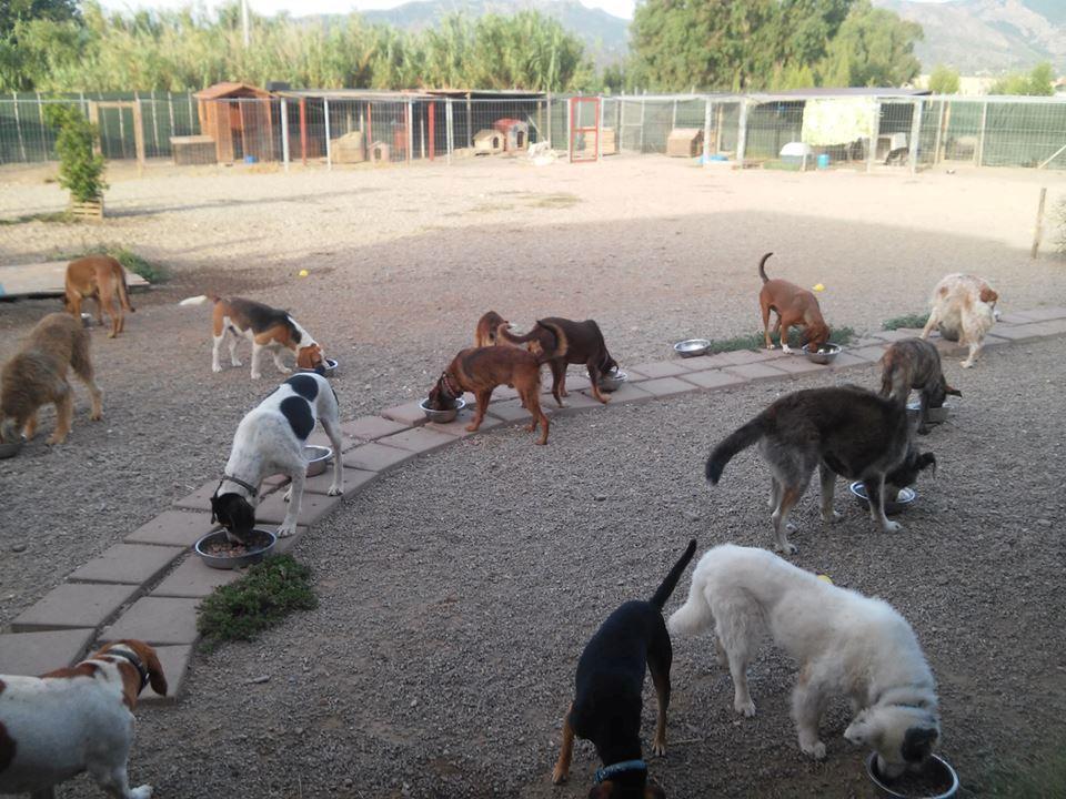 Inchiesta quanti euro si spendono per ogni cane nei - Quanto si da di caparra per acquisto casa ...
