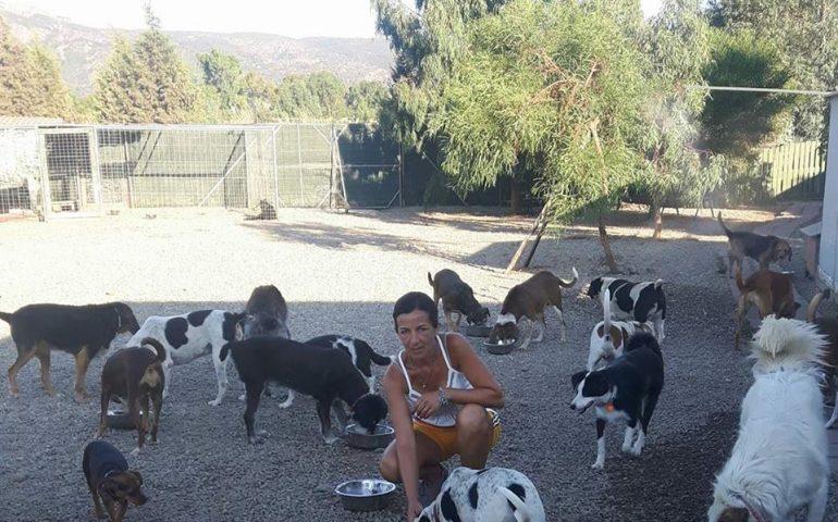 Inchiesta. Quanti euro si spendono per ogni cane nei rifugi della Sardegna? Quanto tempo passa ogni giorno un volontario nella struttura? Tutta la verità e la fatica della lotta al randagismo