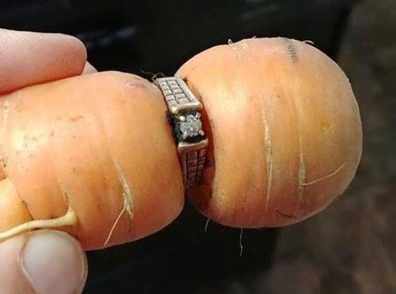 Ritrova anello di fidanzamento 13 anni dopo grazie a una carota