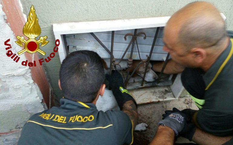 Incastrato per ore nella ringhiera di una finestra: cane salvato dai Vigili del Fuoco a Quartu Sant'Elena