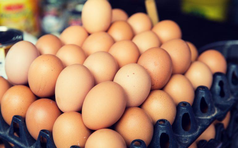 Uova al fipronil: anche l'Italia ha ricevuto uova dalle aziende contaminate