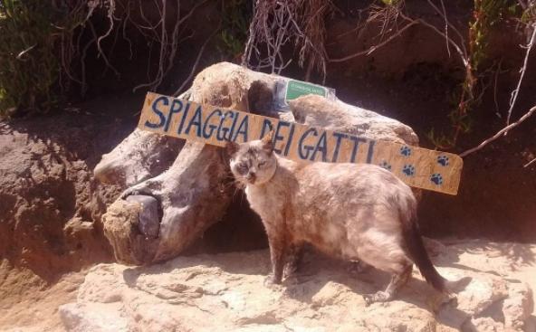 Lo sapevate? Il paradiso dei gatti esiste e si trova in Sardegna: è l'Oasi felina di Su Pallosu