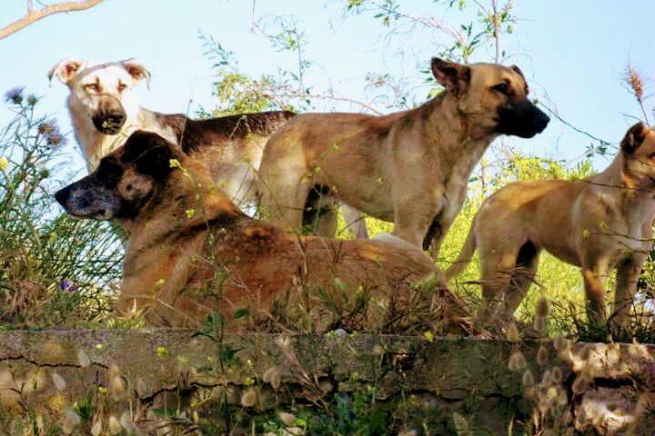 I cani di Giorgino sono spariti: il branco di randagi non si vede più da fine agosto