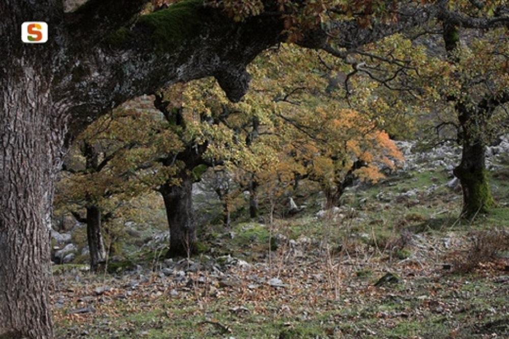 Desulo, foresta di Girgini - Fonte www.sardegnadigitallibrary.it