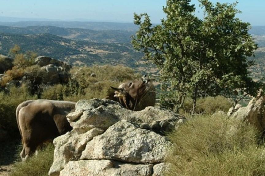 Mamoiada, natura circostante - Fonte www.sardegnadigitallibrary.it
