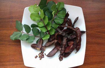Un frutto dimenticato: le carrube, rivalutato dalla cucina vegana per la ricchezza di sostanze nutritive