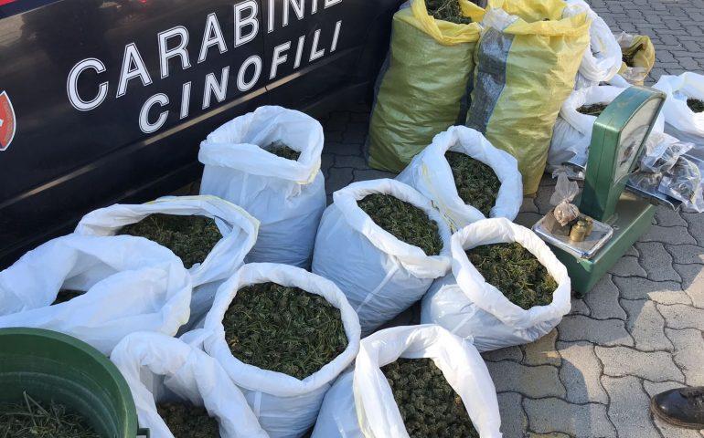 Sequestrati 50 chili di marijuana: maxi operazione antidroga dei carabinieri a Iglesias