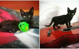 gattine nerine cercano casa