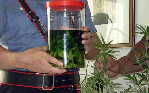 Produceva acquavite aromatizzata allamarijuana, fermato un agricoltore a Cardedu