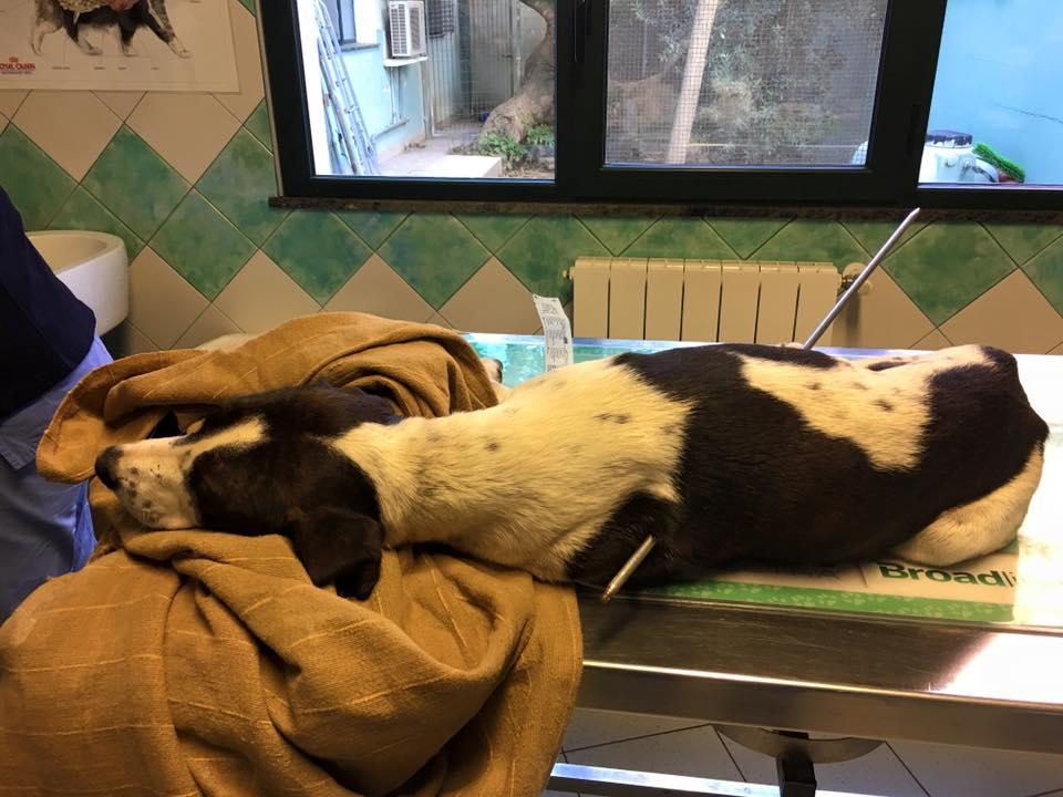 Foto Clinca Veterinaria Duemari
