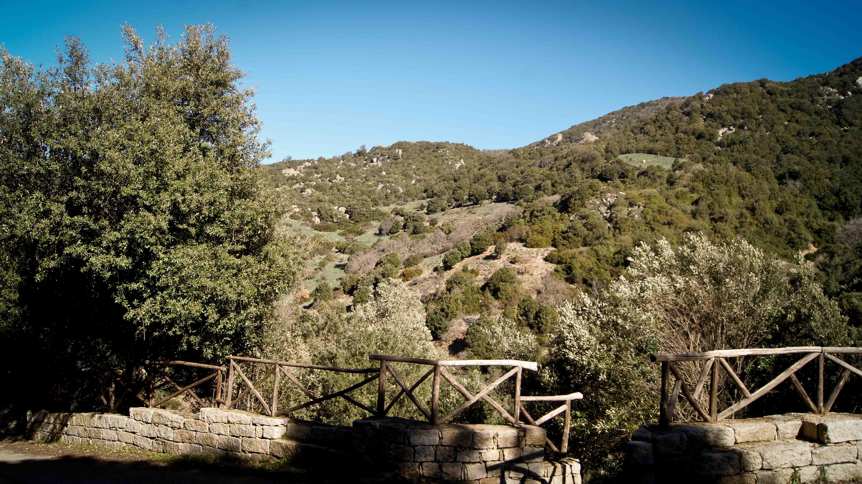 Olzai, natura intorno al mulino - Fonte www.sasartiglia.com