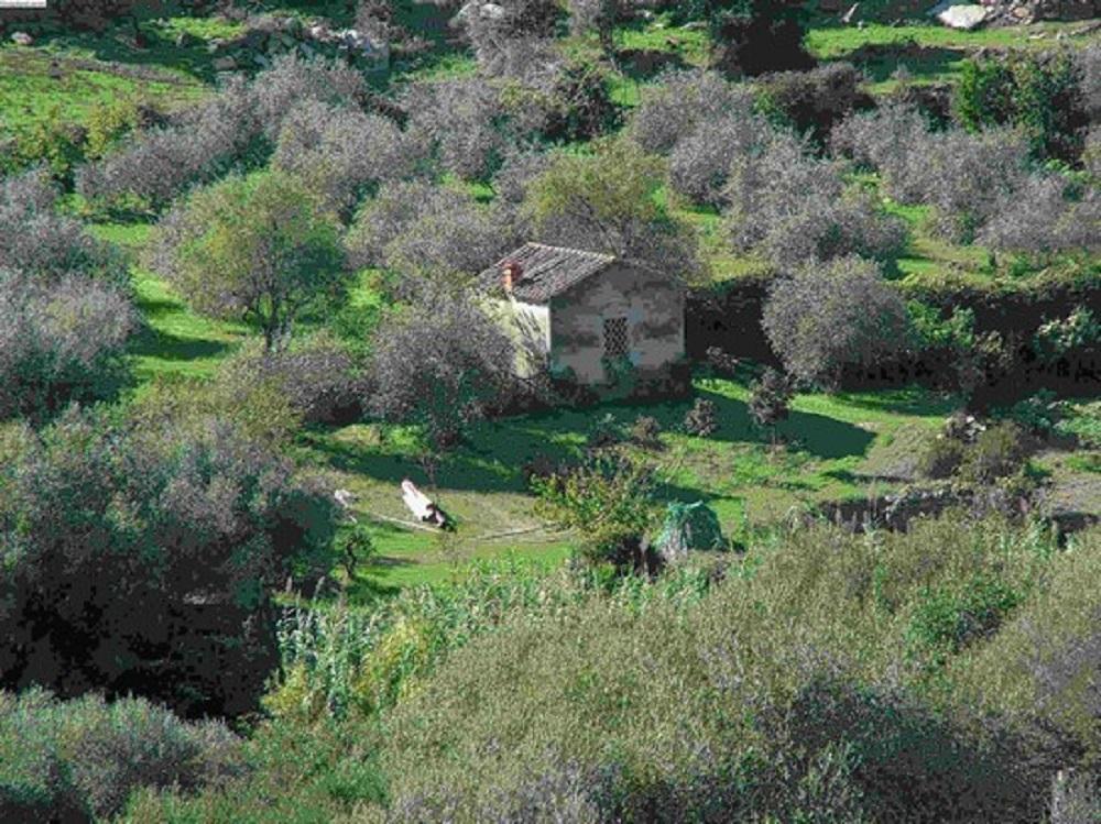 Orotelli, natura circostante - Fonte Comune di Orotelli