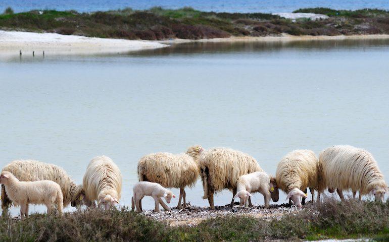 Siccità: riconosciuto lo stato di 'eccezionalità' della Sardegna. In arrivo 45 milioni per gli allevatori