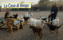 La Casa di Bingo