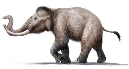 Lo sapevate? 15mila anni fa in Sardegna viveva l'elefante nano