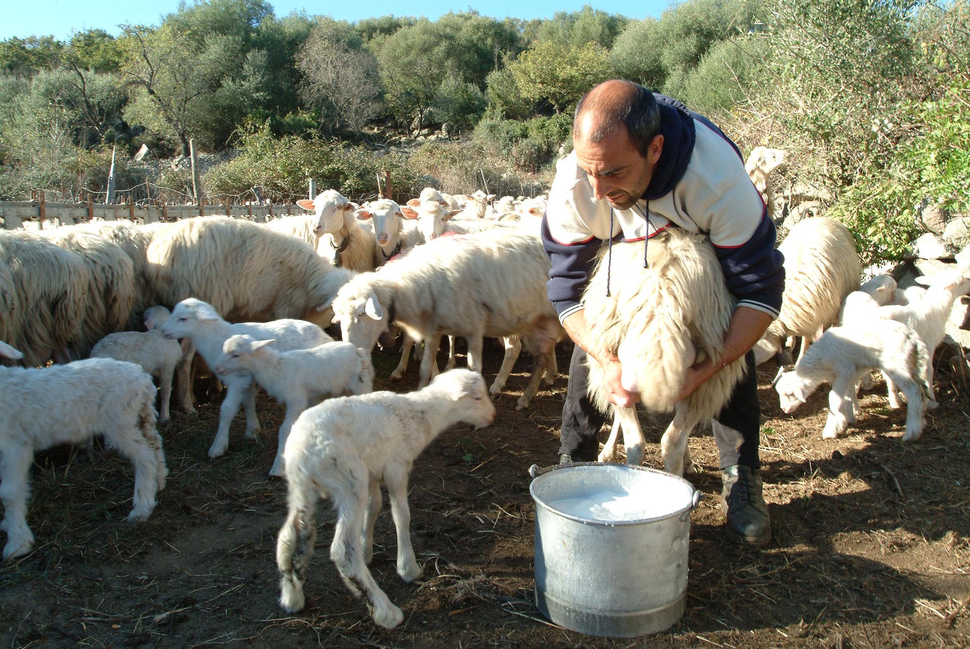 Orune, tradizione pastorale - Fonte www.cuoredellasardegna.it