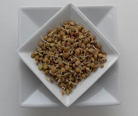 I germogli dei legumi: un alimento sano, molto gustoso e ricchissimo di proprietà nutritive. Ecco si possono preparare in casa
