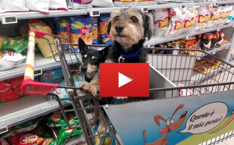 """Cagliari è una città davvero """"dog friendly""""? (VIDEO) A spasso con Gilli e Fisietto"""