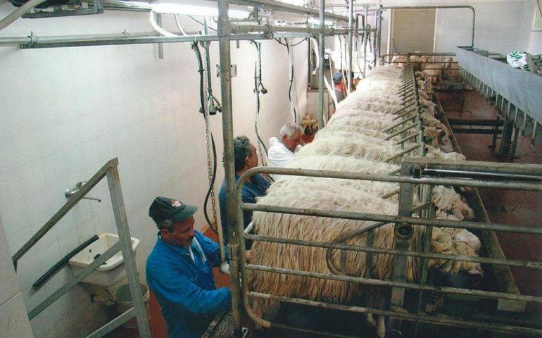 """Tore Piana (Centro studi agricoli): """"Senza metano produrre latte in Sardegna costa 8 centesimi in più al litro"""""""