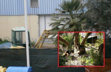 oasi felina via pantelleria