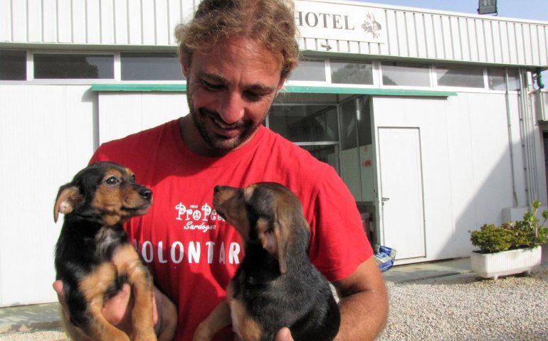 Adottare Un Cane Al Canile: Visite E Cibo Gratuiti E Lezioni Di Educazione  Cinofila. Assemini E Il Dog Hotel Insieme Per Aiutare I Randagi