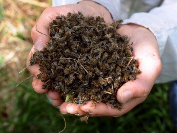 Tra Macomer, Birori e Bortigali da giorni muiono tantissime api: l'allarme degli apicoltori