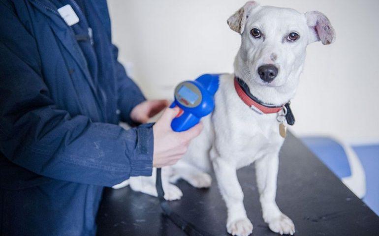 """Microchip day: due giornate per """"mettere in regola"""" gratuitamente i cani di proprietà"""