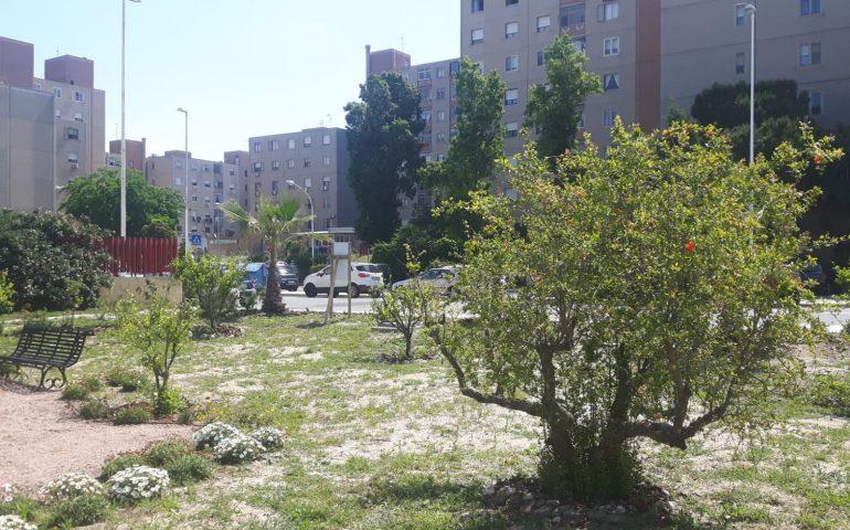 Mele cotogne, fichi, agrumi: un pezzo di campagna nel cuore di Sant'Elia