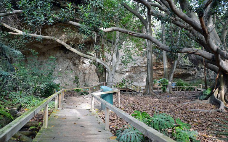 Lo sapevate? I ficus magnolioides dell'Orto Botanico di Cagliari sono più antichi dello stesso giardino