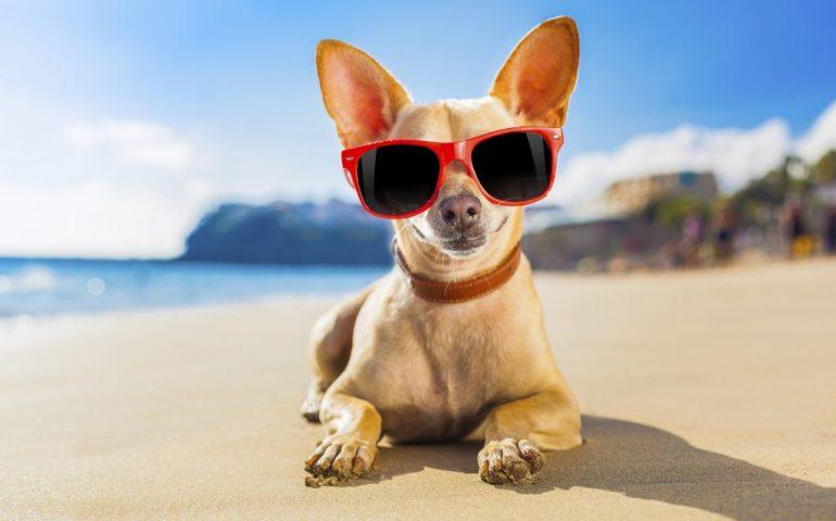 "Sardegna, vigilesse in costume multano famiglia per cane in spiaggia. Aidaa: ""Sanzione assurda"""
