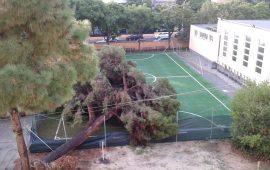 Cagliari, scuola via Venezia: crolla un enorme albero nel giardino