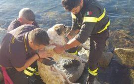 Quartu, S'oru e mari. Cane incastrato fra gli scogli salvato dai Vigili del fuoco