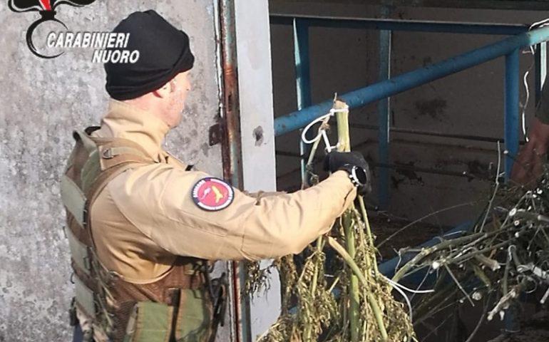 Blitz antidroga: scoperto deposito di marijuana dentro una stazione di pompaggio dell'acqua. In manette tre persone