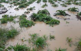 (FOTO) L'inchiesta: l'alluvione a Uta e l'agricoltura. Testimonianze e conta dei danni