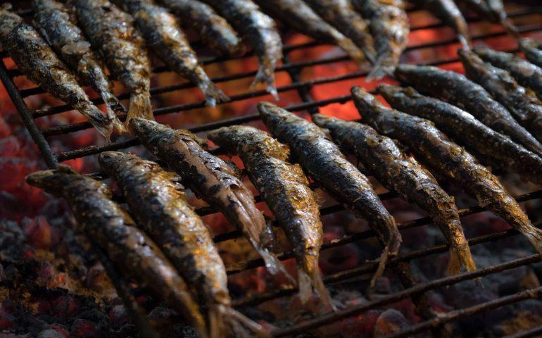 Lo sapevate? Ecco perché le sardine si chiamano così (Sì, c'entra la Sardegna)