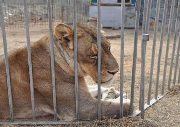 Anche Sanluri dice no agli spettacoli con animali selvatici ed esotici
