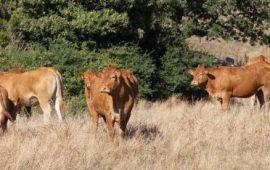 LAVORO, al via il concorso pubblico per veterinario e agronomo. Scopri come fare