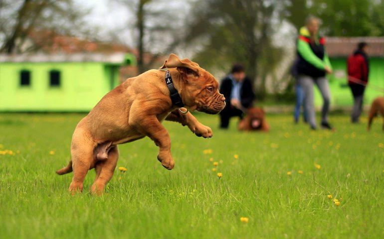 L'avvocato risponde. Cosa accade se il mio cane viene morso da un altro cane o aggredisce una persona?